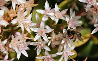 Bygg din egen Örtspiral till bina